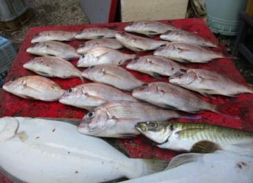 奥村釣船の2018年8月25日(土)3枚目の写真
