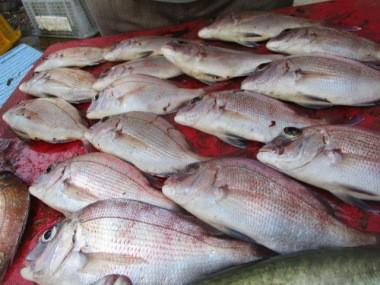 奥村釣船の2018年8月25日(土)4枚目の写真