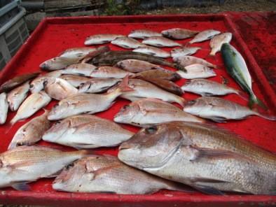 奥村釣船の2018年8月28日(火)3枚目の写真