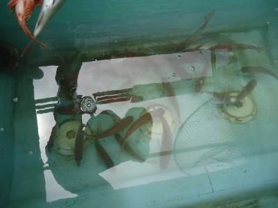 十八宝洋丸の2018年9月1日(土)3枚目の写真