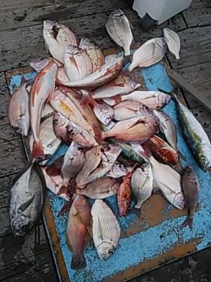 すずらん丸の2018年9月26日(水)1枚目の写真