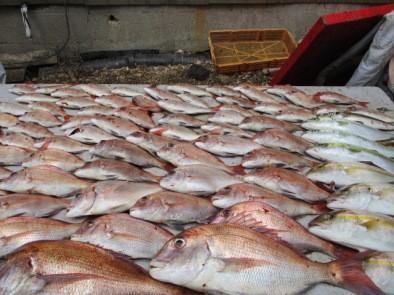 奥村釣船の2018年9月26日(水)4枚目の写真