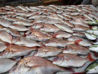奥村釣船の2018年9月27日(木)3枚目の写真