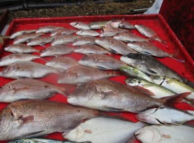 奥村釣船の2018年9月29日(土)3枚目の写真