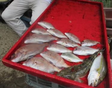 奥村釣船の2018年9月29日(土)5枚目の写真