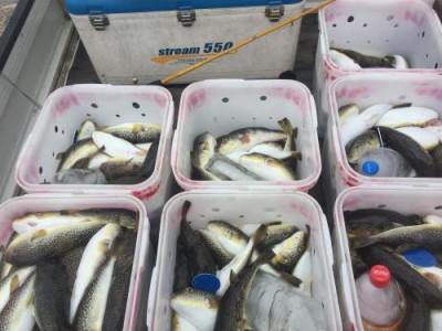 敷嶋丸の2018年10月12日(金)2枚目の写真