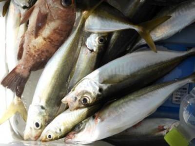 釣具の海友の2018年10月13日(土)3枚目の写真