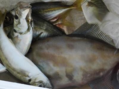 釣具の海友の2018年10月18日(木)4枚目の写真