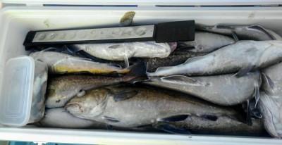 佐々木釣具店 平進丸の2018年10月25日(木)2枚目の写真