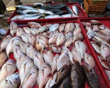 奥村釣船の2018年10月27日(土)4枚目の写真