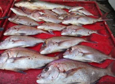 奥村釣船の2018年10月29日(月)4枚目の写真