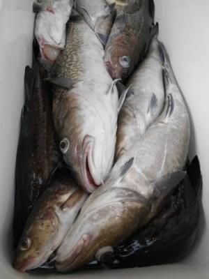 鈴木釣具店の2018年11月16日(金)2枚目の写真