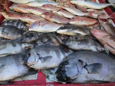 奥村釣船の2018年11月15日(木)4枚目の写真