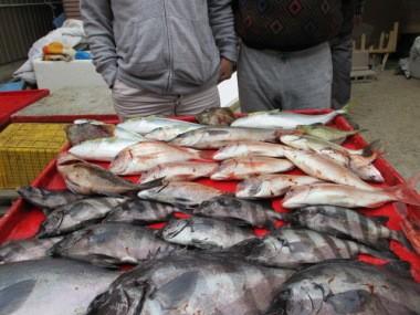 奥村釣船の2018年11月18日(日)4枚目の写真