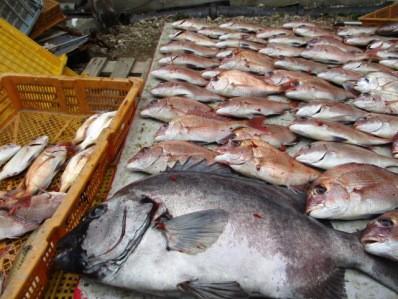 奥村釣船の2018年11月19日(月)4枚目の写真