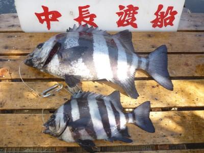中長渡船の2018年11月25日(日)3枚目の写真
