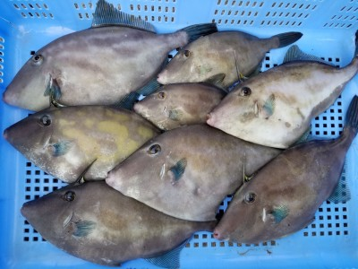 小松乗合船の2018年11月26日(月)1枚目の写真