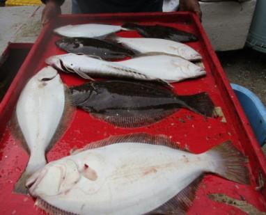 奥村釣船の2018年11月26日(月)4枚目の写真