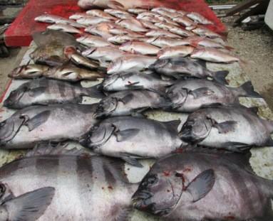 奥村釣船の2018年11月28日(水)5枚目の写真