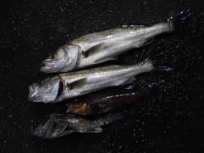 鈴木釣具店の2018年11月21日(水)2枚目の写真