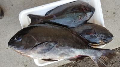 乙島丸の2018年11月7日(水)3枚目の写真