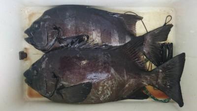乙島丸の2018年11月12日(月)2枚目の写真