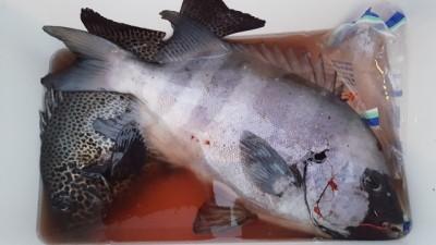 乙島丸の2018年11月18日(日)1枚目の写真