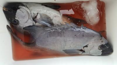 乙島丸の2018年11月19日(月)2枚目の写真