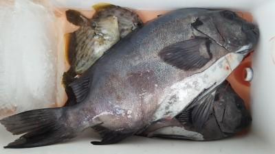 乙島丸の2018年11月19日(月)3枚目の写真