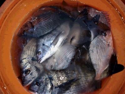 永田渡船の2018年12月1日(土)3枚目の写真