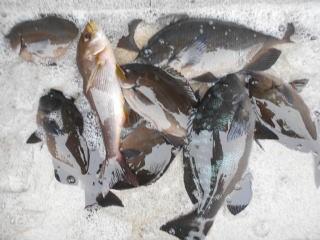 弁天丸の2018年11月16日(金)4枚目の写真