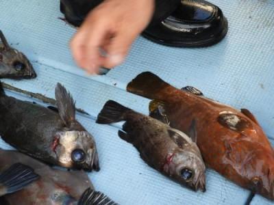 釣具の海友の2018年12月1日(土)1枚目の写真