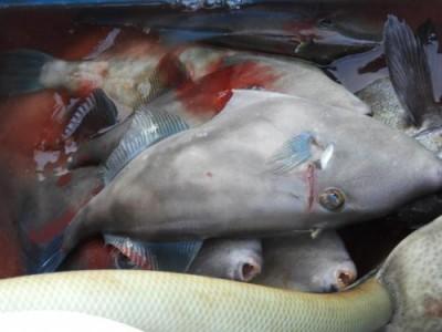 釣具の海友の2018年12月1日(土)3枚目の写真