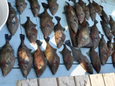 釣具の海友の2018年12月1日(土)4枚目の写真
