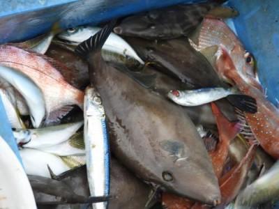 釣具の海友の2018年12月2日(日)3枚目の写真