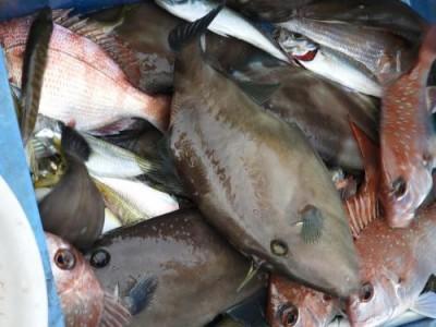 釣具の海友の2018年12月2日(日)4枚目の写真