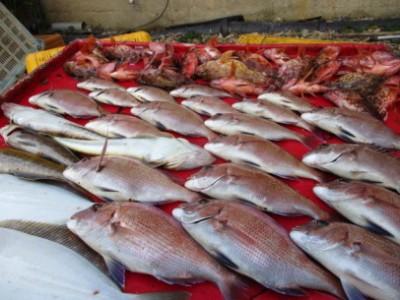 奥村釣船の2018年12月5日(水)4枚目の写真