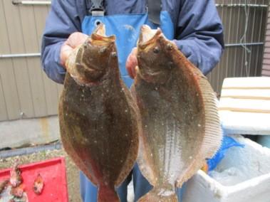 奥村釣船の2018年12月12日(水)4枚目の写真