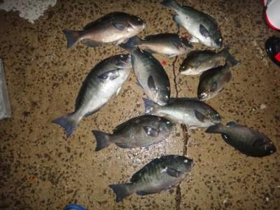 丸銀釣りセンターの2018年11月30日(金)4枚目の写真