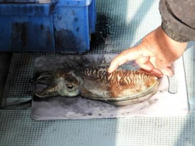 釣具の海友の2018年12月14日(金)4枚目の写真