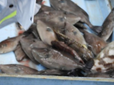 釣具の海友の2018年12月16日(日)4枚目の写真
