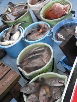 釣具の海友の2018年12月16日(日)5枚目の写真
