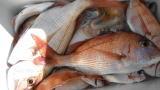太政丸の2018年11月23日(金)1枚目の写真