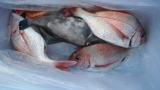 太政丸の2018年11月23日(金)2枚目の写真
