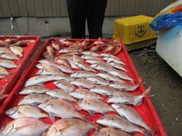 奥村釣船の2018年12月23日(日)4枚目の写真
