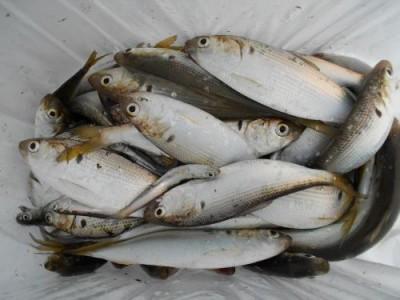 鈴木釣具店の2018年12月20日(木)2枚目の写真