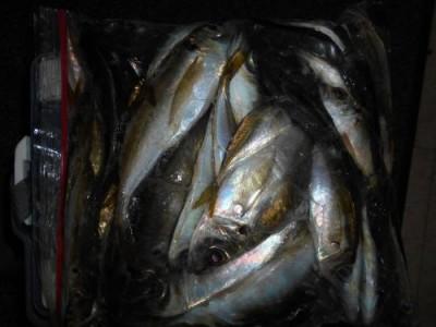 鈴木釣具店の2018年12月22日(土)3枚目の写真