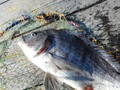 由良海つり公園&釣堀ランドの2019年1月4日(金)2枚目の写真