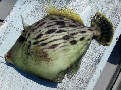 『魚磯丸』船宿